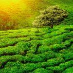 Terrassen-Landschaft Sri Lanka