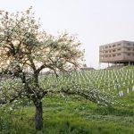 Loisium Wine & Spa Südsteiermark: Wein & Wellness