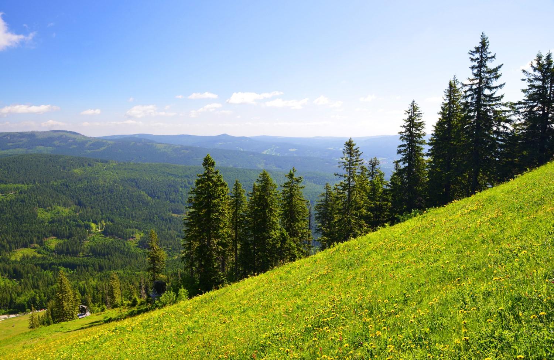 Schöne Natur findet Ihr im Bayrischen Wald.