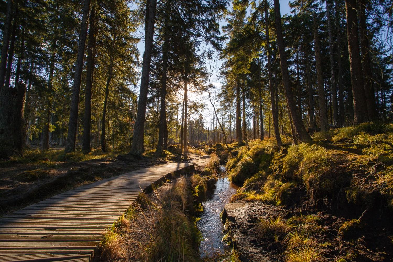 Deutschland hat wunderschöne Wälder.