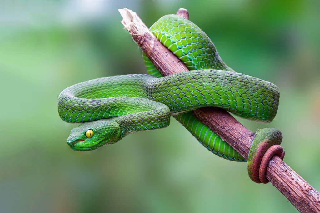 Schlangenmassage