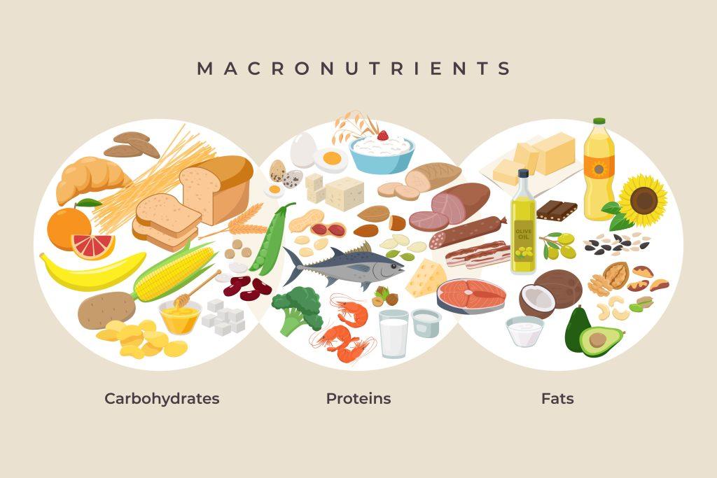 Verschiedene Lebensmittel sind den Makronährstoffen Kohlenhydrate, Proteine und Fette graphisch zugeteilt.